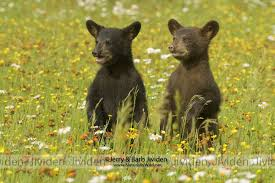 My grizzly cub friends, Yogi and BooBoo